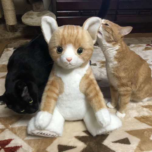 ウェイトキャット ペットをモデルに 茶トラ猫