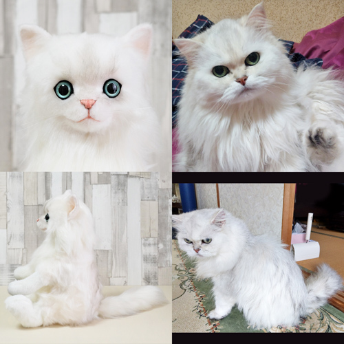 愛猫チンチラシルバーのぬいぐるみ ウエイトドール