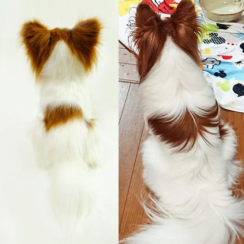 愛犬のパピヨン 写真からぬいぐるみ制作
