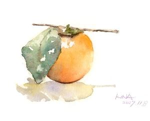 KINA 透明水彩教室 柿