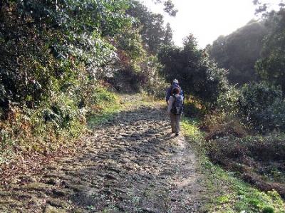 熊野古道ツアー なっとく熊野ウォーク 高野坂の石畳
