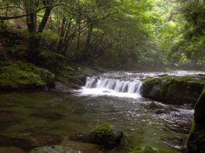 エコツアー 那智原生林と四十八滝巡り なかつ