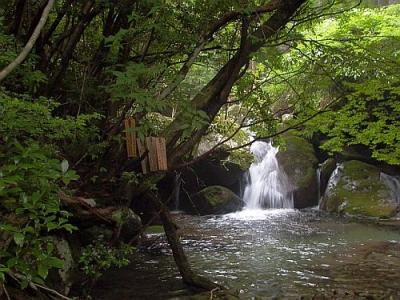 エコツアー 那智原生林と四十八滝巡り たすき