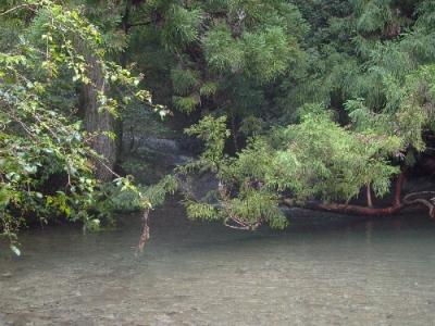 エコツアー 那智原生林と四十八滝巡り かなやま