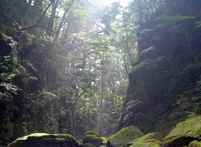エコツアー 那智原生林 照葉樹林の文化(もののけ姫の世界)