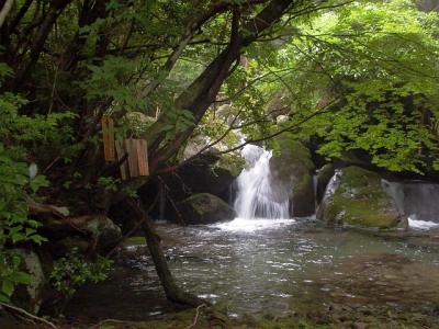 エコツアー 那智原生林と四十八滝 たすき