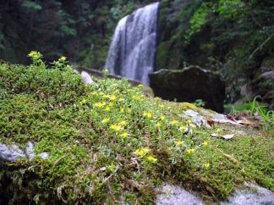 エコツアー 那智四十八滝 ヒメレンゲと三の滝