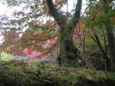 熊野古道ツアーパワースポット大斎原(おおゆのはら)の紅葉