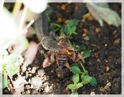 トカゲと蜂