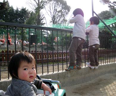 動物園にてチビッコトリオ