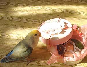 桜チョコとちまめ