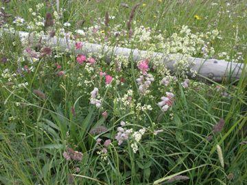 グアルダの花
