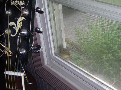 網戸と窓の隙間に閉じ込めた