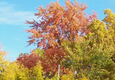 青い空と紅葉