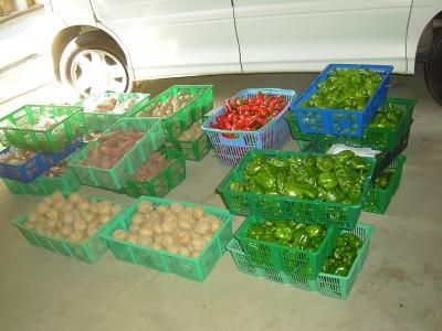 9月の販売野菜