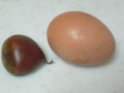 最初の卵は50gでした