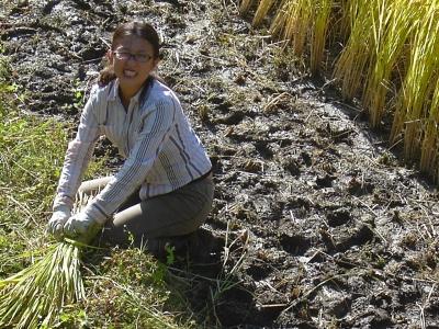 初めて稲刈りしました