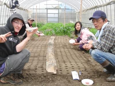 サラダ水菜、法蓮草の播種