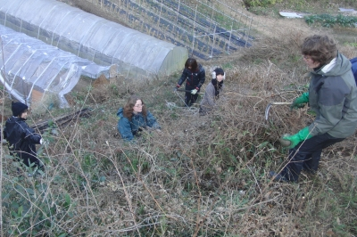 coccocyann崖斜面の草刈