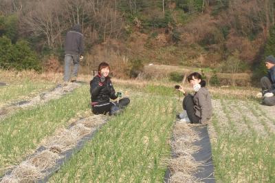 早生玉葱の除草、寒肥入れ