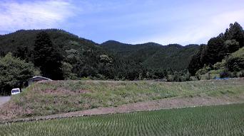 川根6月中旬の田んぼ