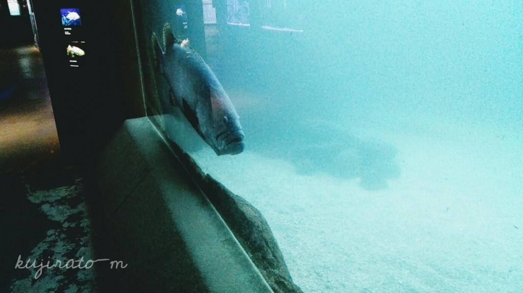 ワイキキ水族館で見た、おじさんみたいな顔の魚