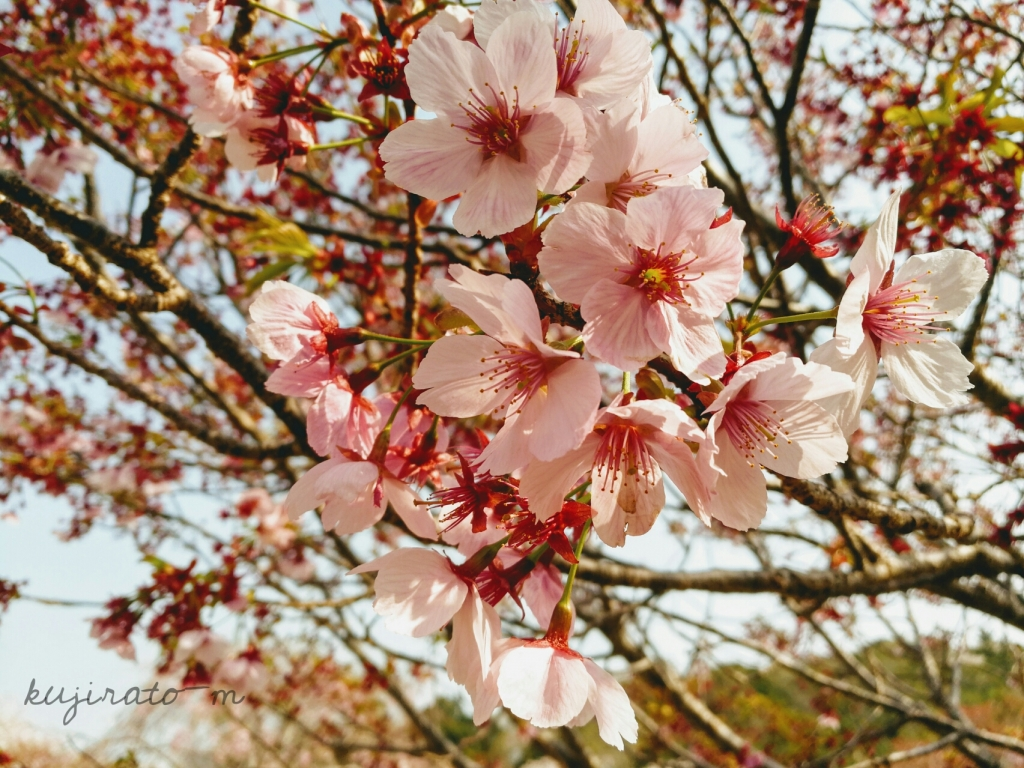 桜のアップ。少し雰囲気を出した加工で