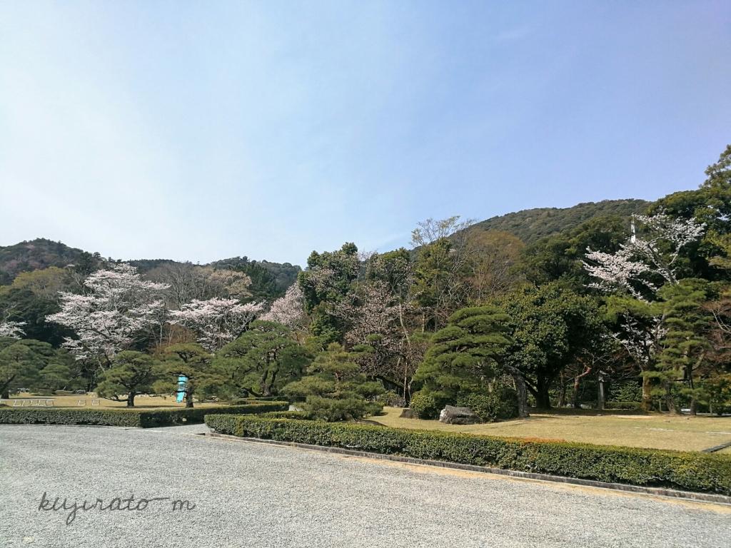 伊勢神宮の松の木のお庭