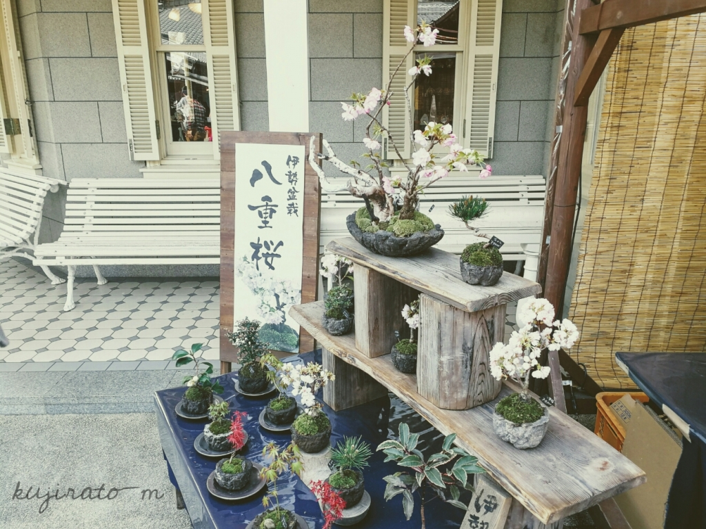 伊勢、おかげ横丁で売られていたミニ盆栽