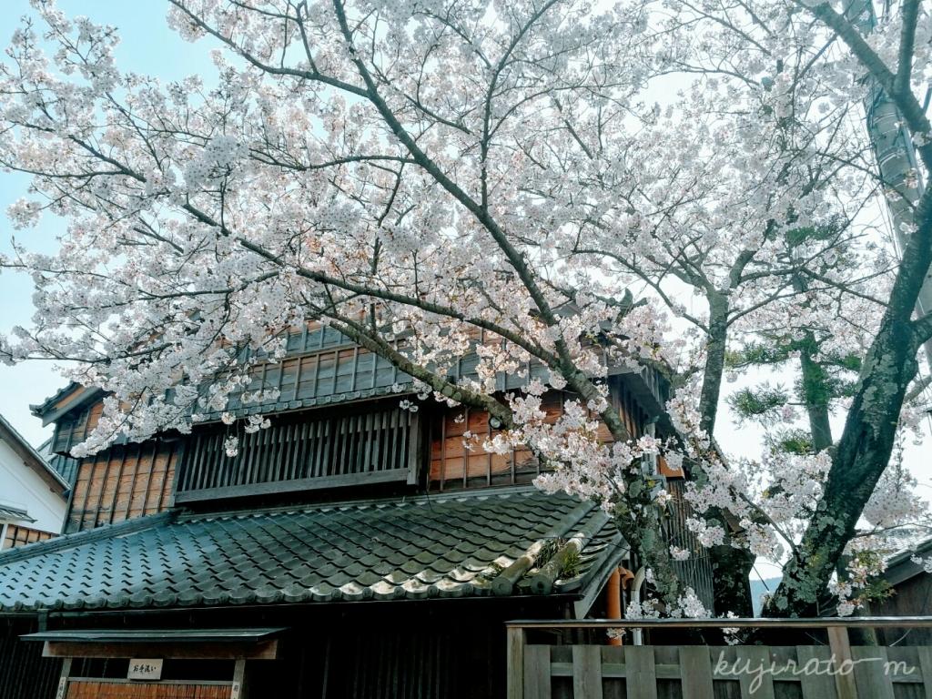 伊勢神宮参拝の帰り道で見た、桜がきれい