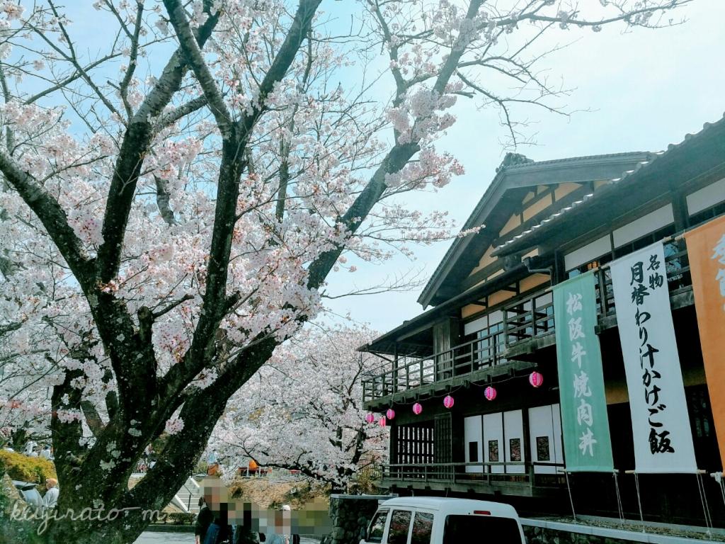 伊勢、桜を見ながらランチも良いものですね