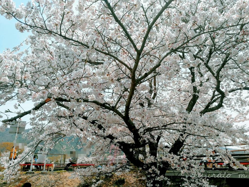 伊勢神宮、ベンチでくつろいでのんびりお花見