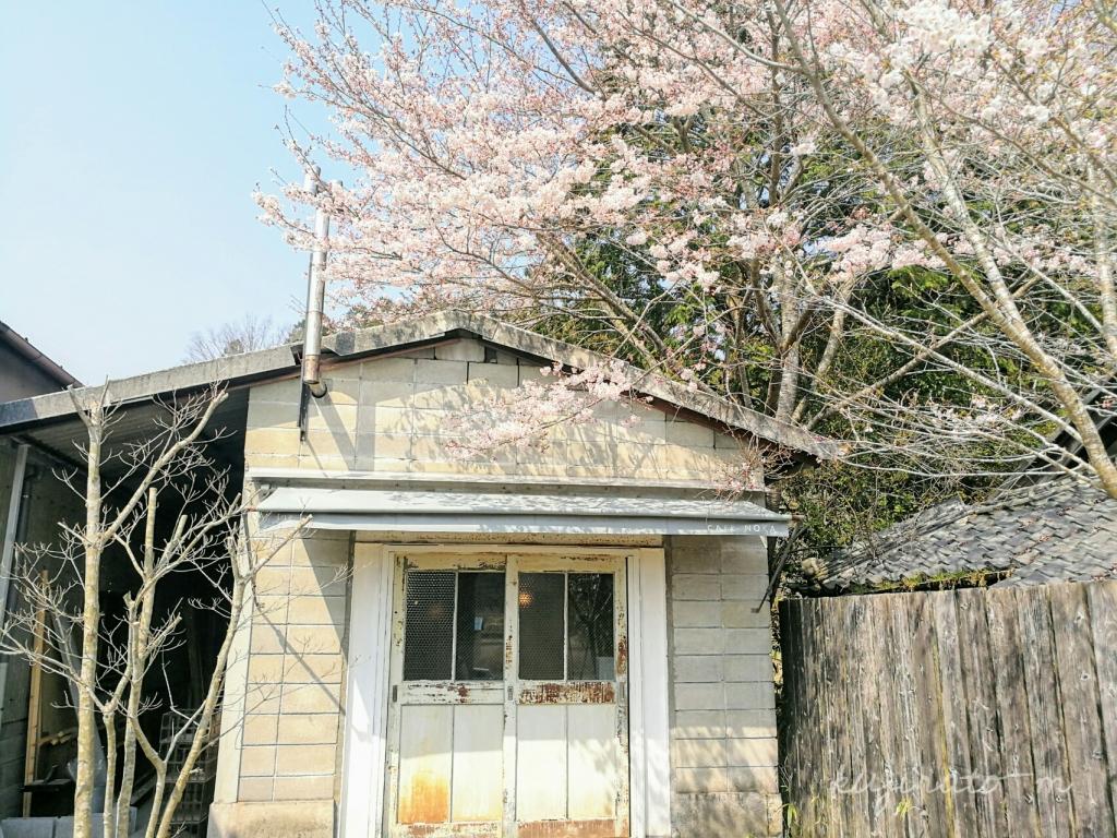 三重県伊賀市丸柱にあるオシャレカフェ『cafe noka』と桜