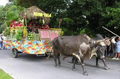 ゆったりと山車を引く牛たち。7体ほどの山車が練り歩きました。