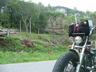 森林伐採されていました。 (^^;