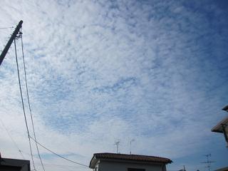 朝、キレイなウロコ雲が出ていました。 (^-^)