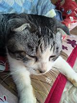 バーバラ猫