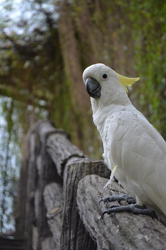 le14aout perroquet