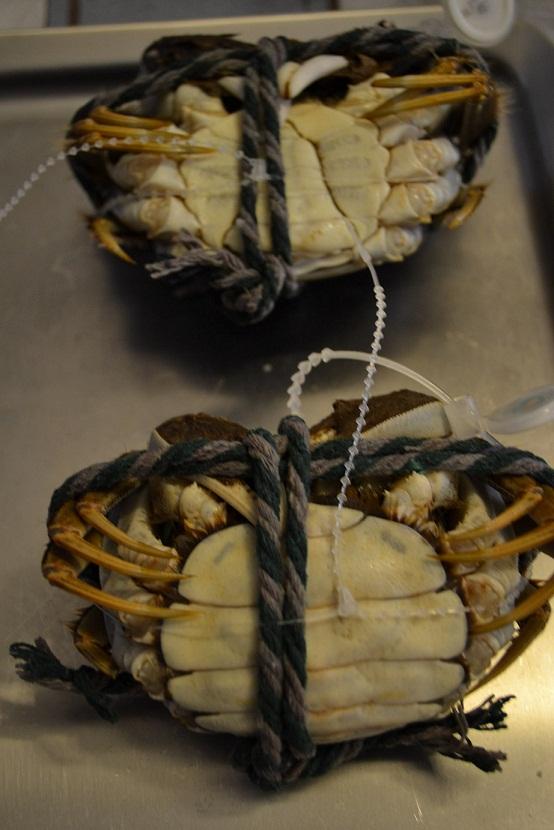 le22octobre crabes2