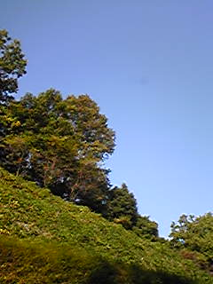 Image273.jpg