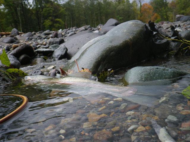 2016秋釣り�
