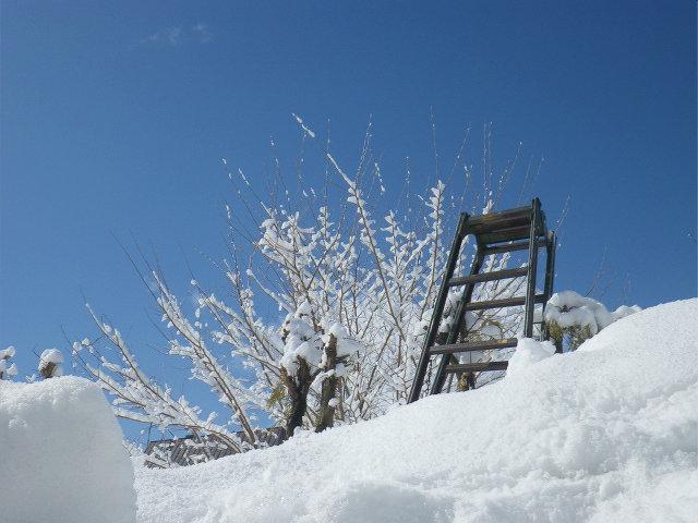2018春雪�