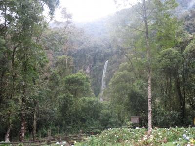 林から見える滝