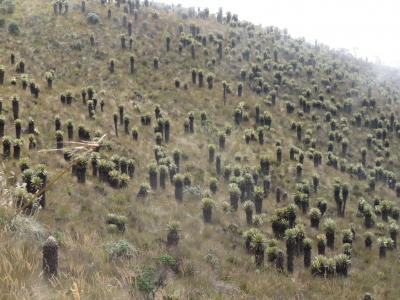 4000mの植物