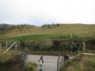 高度3900mにあるジャガイモ畑