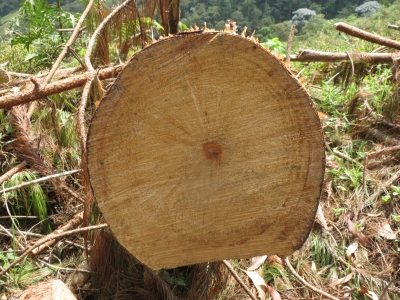 年輪のない材木