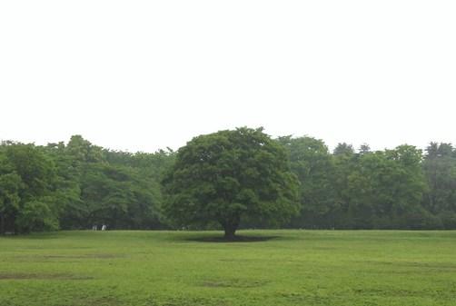 しっとりと静かな草原