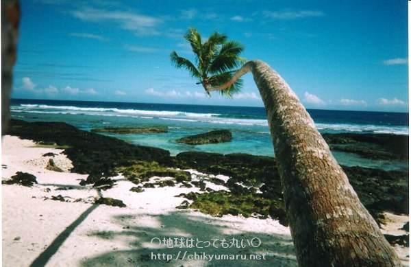パラダイスビーチの椰子の木
