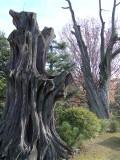 渉成園の枯れ木