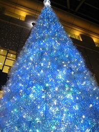 Daimaru tree2